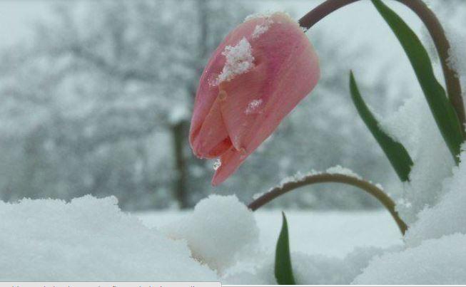 Una rosa en pleno invierno