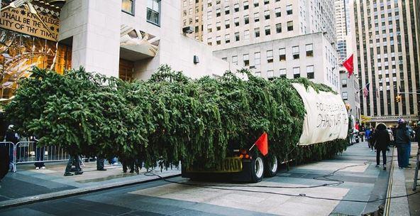 El gran trabajo del árbol